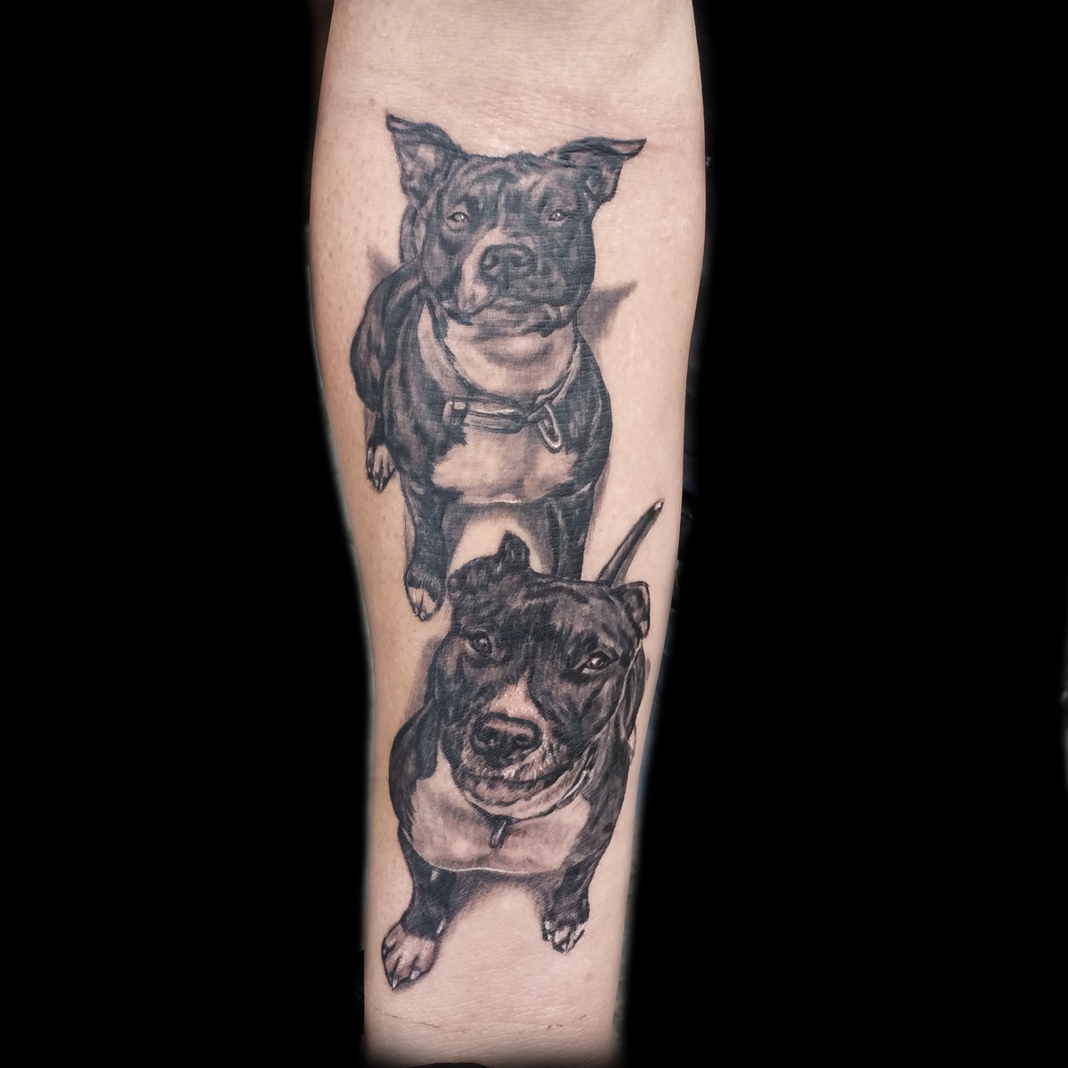 Realistic Dog Tattoos Done By Brian Martinez At Masterpiece Tattoo